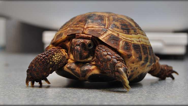Exotic Pet Veterinarian near Springfield IL